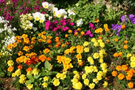 園芸作業の画像