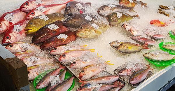 お魚センター
